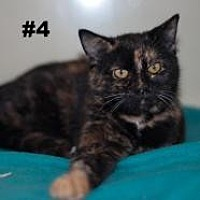Adopt A Pet :: Sassy - New Martinsville, WV