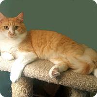 Adopt A Pet :: Honeycomb - Smyrna, GA
