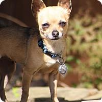 Adopt A Pet :: Hannah - Dallas, TX