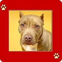 Adopt A Pet :: Jax - Dallas, TX