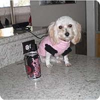 Adopt A Pet :: Capri - Rescue, CA