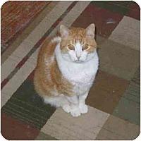 Adopt A Pet :: Tigger - North Boston, NY