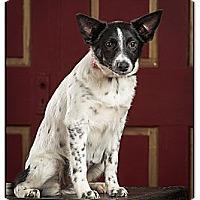 Adopt A Pet :: Hope - Owensboro, KY