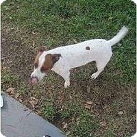 Adopt A Pet :: Scratch in Houston - Houston, TX