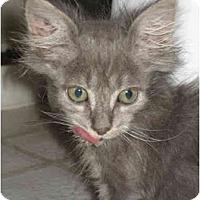 Adopt A Pet :: Libby - Davis, CA