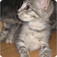 Adopt A Pet :: Laurel - Davis, CA