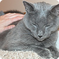 Adopt A Pet :: Toby_Courtesy Post - Columbia, MD