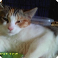 Adopt A Pet :: Clementine - Leamington, ON