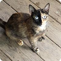 Adopt A Pet :: Meatball - Acme, PA