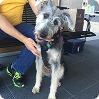 Adopt A Pet :: Caitie - Baton Rouge, LA