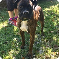 Adopt A Pet :: PEPPER - Cadiz, OH