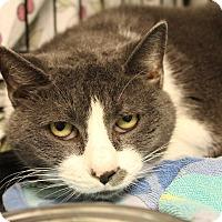 Adopt A Pet :: Gigi - Warwick, RI