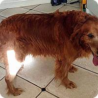 Adopt A Pet :: Clifford - BIRMINGHAM, AL