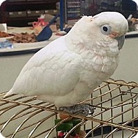 Adopt A Pet :: Lucy - Lenexa, KS