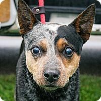 Adopt A Pet :: Jasper - Lake Odessa, MI