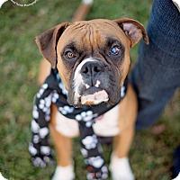 Adopt A Pet :: Stanley - Kingwood, TX