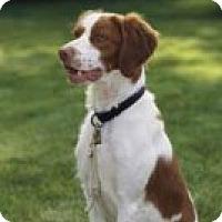 Adopt A Pet :: Jezabelle - Albuquerque, NM