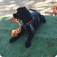 Adopt A Pet :: Joe Perry - Toluca Lake, CA