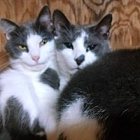 Adopt A Pet :: Paul - Belvidere, NJ