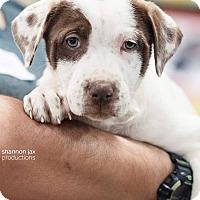 Adopt A Pet :: Temperance - Gainesville, FL