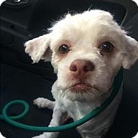 Adopt A Pet :: Buster - Encino, CA