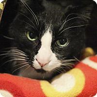 Adopt A Pet :: Mitch - Lincoln, NE