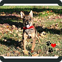 Adopt A Pet :: Griz - Marion, KY