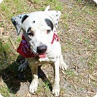 Adopt A Pet :: Nani - Tampa, FL