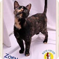 Adopt A Pet :: Zoey - Wooster, OH