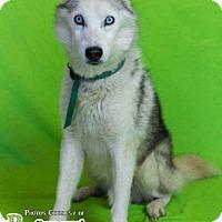 Adopt A Pet :: Larry - Elyria, OH