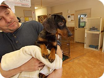 Dachshund/Dachshund Mix Dog for adoption in Heber Springs, Arkansas - Hank
