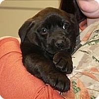 Adopt A Pet :: Fina - Chicago, IL