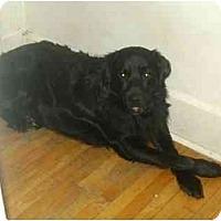 Adopt A Pet :: Shiloh - Rigaud, QC