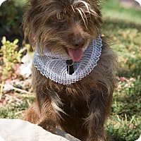 Adopt A Pet :: Dorothy - Sherman Oaks, CA
