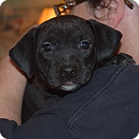 Adopt A Pet :: KENNEDY - MILWAUKEE, WI