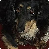 Adopt A Pet :: Shelby - Georgetown, KY