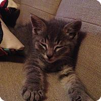 Adopt A Pet :: Dover - Reston, VA