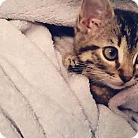Adopt A Pet :: Princess Minky - Valley Park, MO