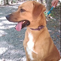Adopt A Pet :: Bailey - Pompton Lakes, NJ