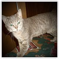 Adopt A Pet :: SAGE - Medford, WI