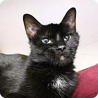 Adopt A Pet :: Delores Abernathy - Chicago, IL