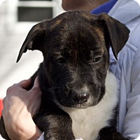 Adopt A Pet :: Luther - Toms River, NJ