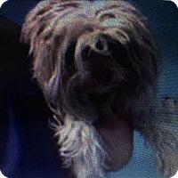 Adopt A Pet :: Ruby - Encino, CA