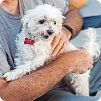 Adopt A Pet :: Mazel - San Diego, CA