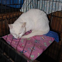 Adopt A Pet :: Johnny - Brainardsville, NY