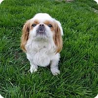 Adopt A Pet :: Zumi - Inver Grove, MN