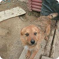 Adopt A Pet :: FOX - Hilham, TN