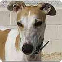 Adopt A Pet :: Gabe - St Petersburg, FL