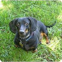 Adopt A Pet :: Rocco - San Jose, CA