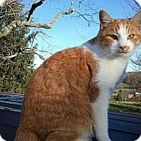 Adopt A Pet :: Patton - Maxwelton, WV